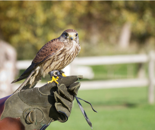 3 Hour Falconry Experience valued at £59.00
