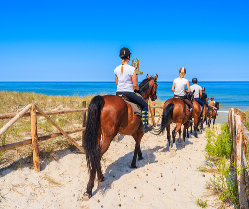 Horse Riding Experience winning bidder