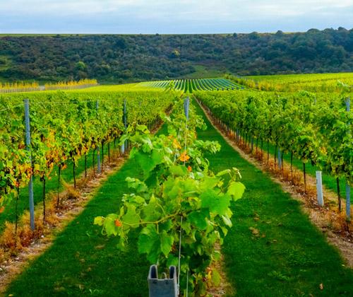 Vineyard Tour & Tasting for Two winning bidder